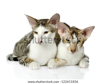 two kittens look in the camera. isolated on white background