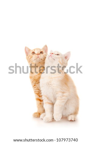 Two kittens looking up, isolated on white
