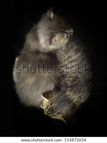 Two kittens on a dark background.