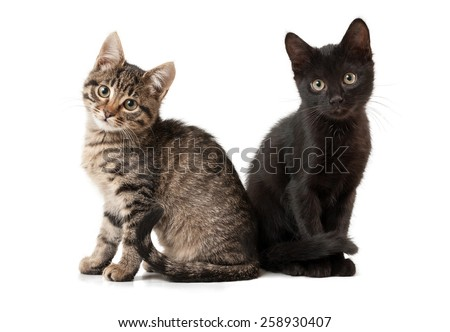Two kittens on a white isolated background look ahead