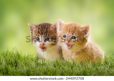 two kittens on green meadow in back light - stock photo