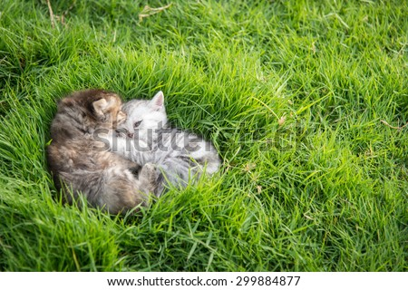 Two kittens playing on green grass