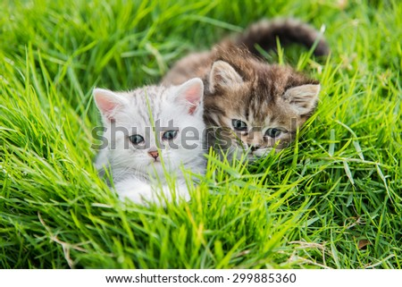 Two kittens playing on green grass - stock photo