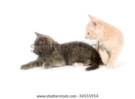 Two kittens resting on a white background