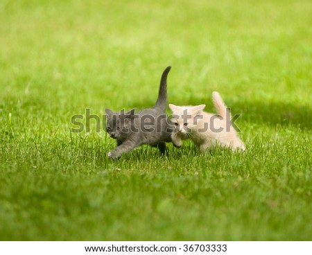 Two kittens running through the grass and playing - stock photo
