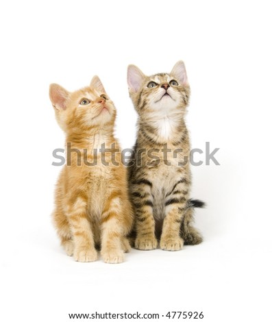 Two kittens sit next to each other on a white background