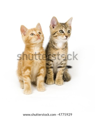 Two kittens sit next to each other on a white background - stock photo
