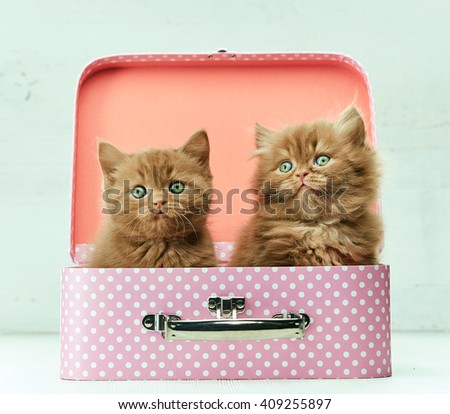 two kittens sitting in pink bag, selective focus, filtered image