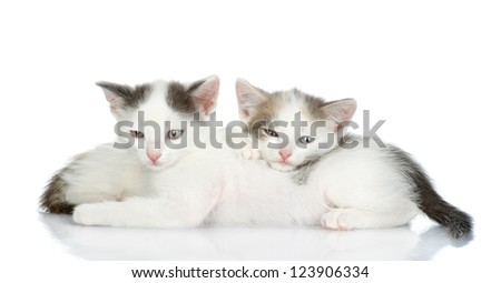 two kittens sleep together. looking at camera. isolated on white background