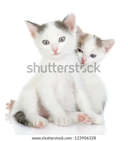 two kittens together. looking at camera. isolated on white background - stock photo