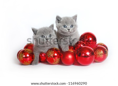Two kittens with Christmas balls on a white background. - stock photo