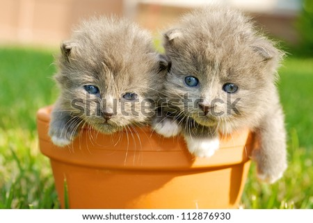 Two kitty cats - stock photo