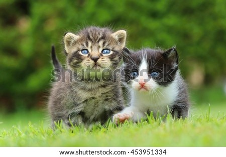Two kitty siblings - stock photo