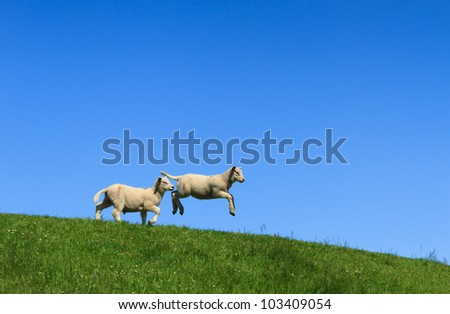 Two lambs, one jumping, on a green dike and with a clear blue sky. - stock photo