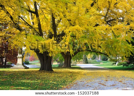 Two Large Colorful Trees With Branches Overhanging A Quiet Cemetery & Arboretum Road In Autumn, Southwestern Ohio, USA - stock photo