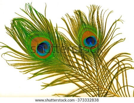Two large detailed and colored peacock feather on white background