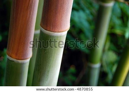 Two large red and green bamboo stalks, background out of focus - stock photo