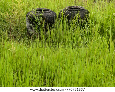 Two large water vessels called 'ong nam' lie in an overgrown field in Thailand