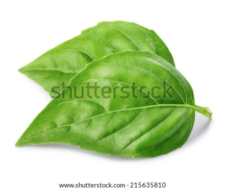 Two leaf of basil isolated on white background - stock photo