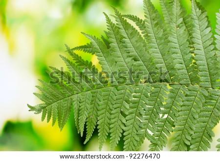 Two leaves of fern on green background