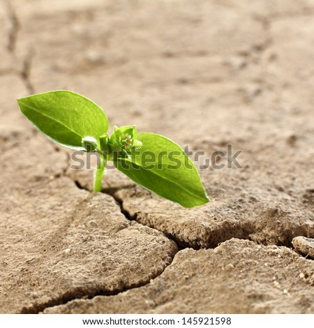 two leaves of green  - stock photo
