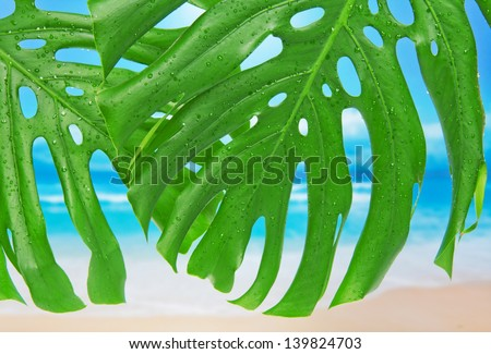 Two leaves with water drops against a beach