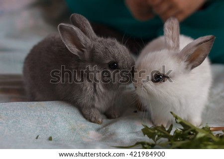 Two little adorable bunny rabbits - stock photo