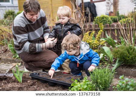 Two little boys and father planting seeds in vegetable garden