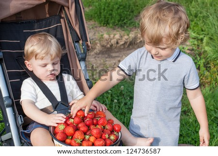 Two little brother boys with bowl strawberries on organic berry farm