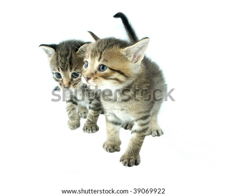 Two little cats - stock photo