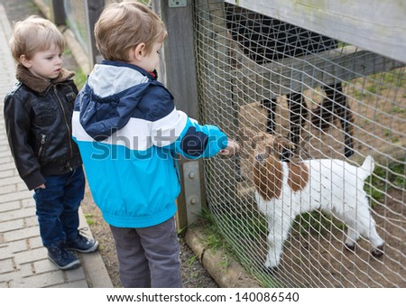 Two little cute boys  feeding animals in zoo