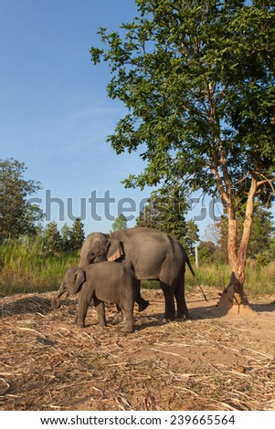 two little elephant in elephant village with tree - stock photo