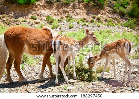 two little fawns and a pony are eating grass - stock photo