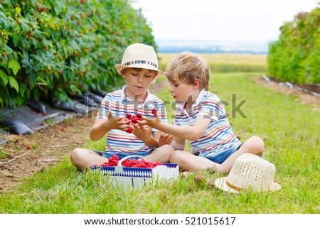 Two little friends, kid boys having fun on raspberry farm in summer. Children eating healthy organic food, fresh berries. Happy twins. Happy kids helping with harvest