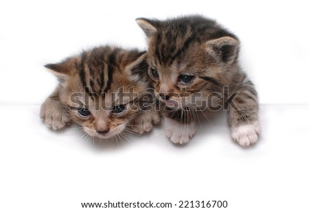 Two Little Kittens - stock photo