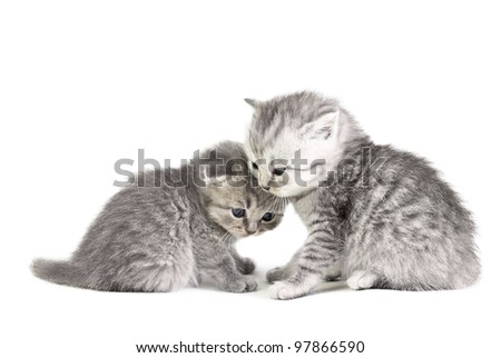 Two little kittens isolated on the white