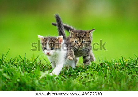 Two little kittens on the grass - stock photo