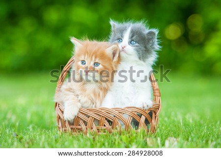Two little kittens sitting in the basket