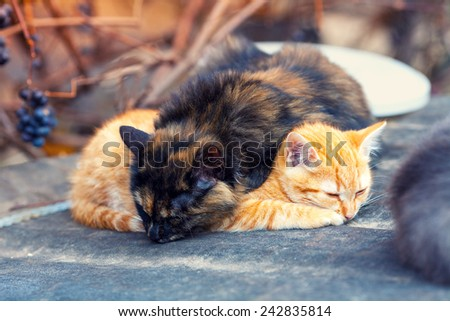 Two little  kittens sleeping outdoors - stock photo