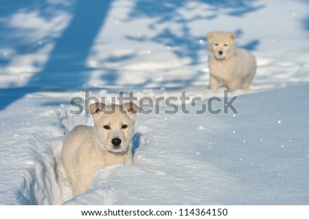 Two little puppy in deep snow.