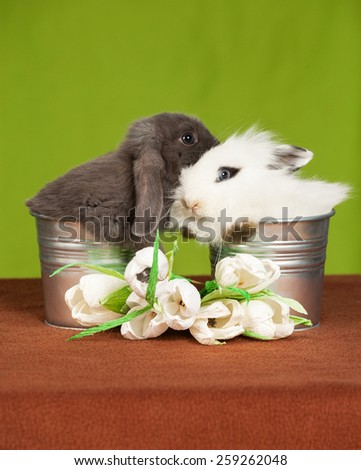 two little rabbit in a bucket and flowers  - stock photo