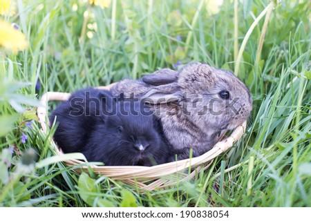 Two little rabbit on green grass - stock photo