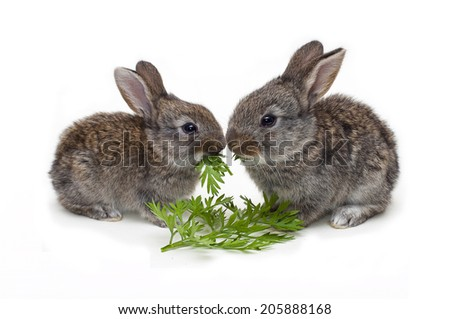 two little Rabbits with carrot leafs on white background - stock photo