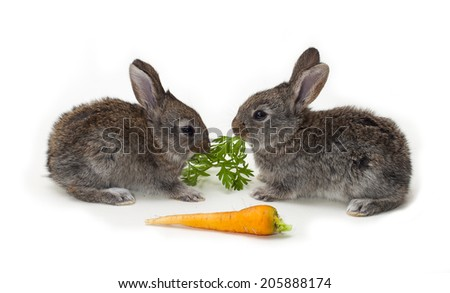 two little Rabbits with carrot on white background - stock photo