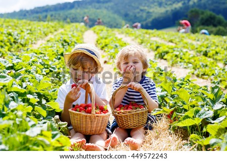 Two little sibling kid boys having fun on strawberry farm in summer. Children eating healthy organic food, fresh berries.