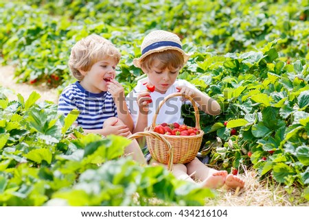 Two little sibling kids boys having fun on strawberry farm in summer. Children, cute twins eating healthy organic food, fresh berries as snack.