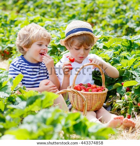 Two little sibling kids boys having fun on strawberry farm in summer. Children, cute twins eating healthy organic food, fresh berries as snack. - stock photo