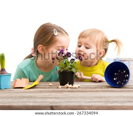 Two little sisters are engaged in gardening. Hyacinth plant flowers on a wooden table - stock photo