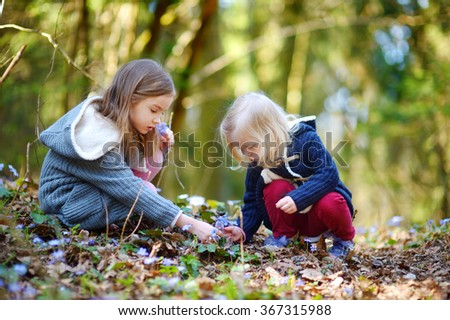 Two little sisters picking the first flowers of spring on beautiful spring day - stock photo