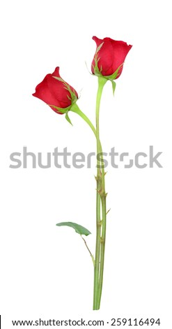 Two long stem red roses, mother day - stock photo